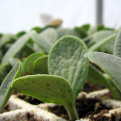 WEB_thumbnail-seedlings