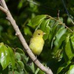On the Importance of Habitat